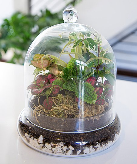 cloche-terrarium-syndicate-scentandviolet-flowers-gifts-plants-houston-tx-florist.jpg