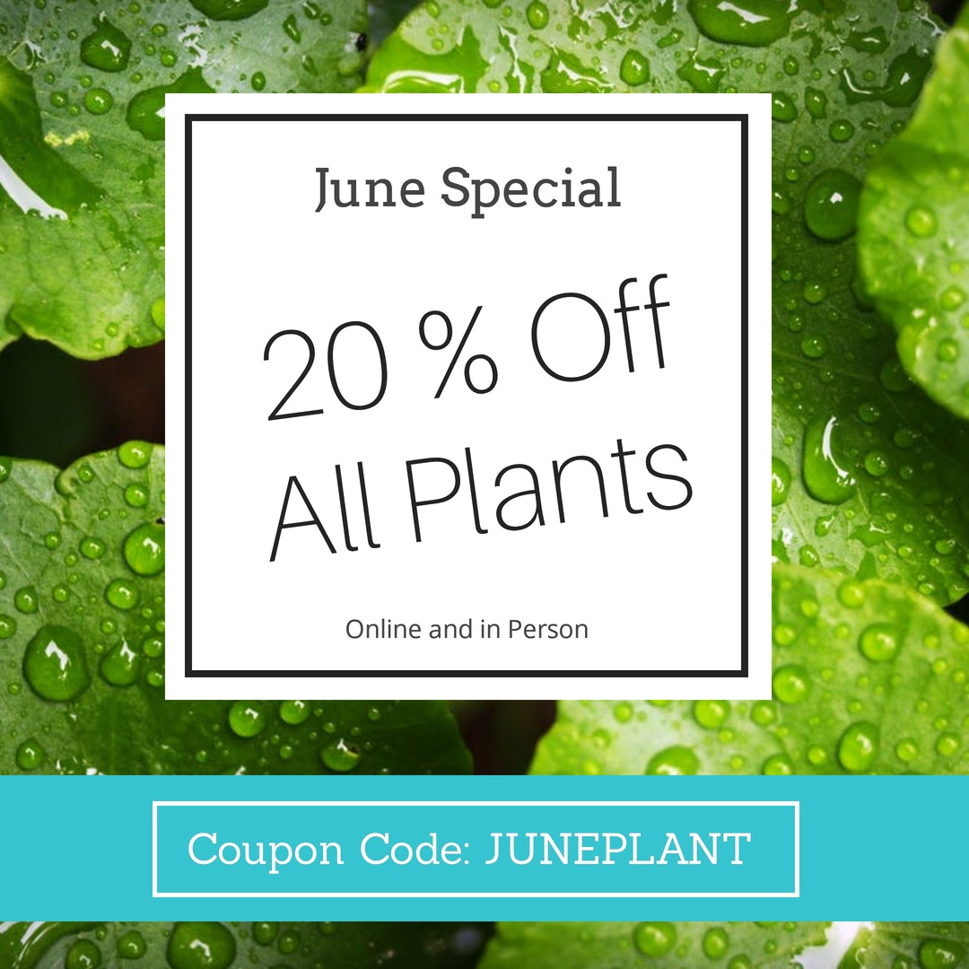 scentandviolet-coupon-plant-special
