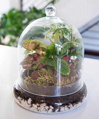 Cloche Terrarium in Houston, TX