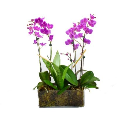 Purple Orchid Plant Garden - Glass in Houston, TX