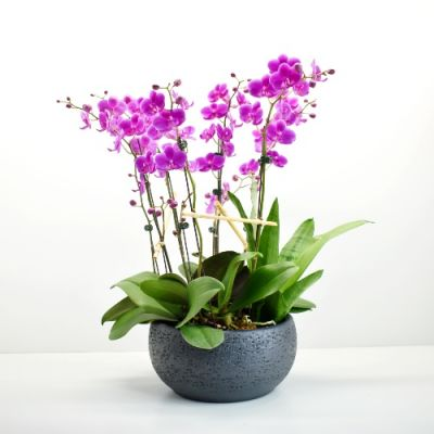 Orchid Plant Garden