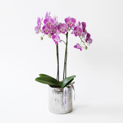 Purple Orchid in Silver in Houston, TX