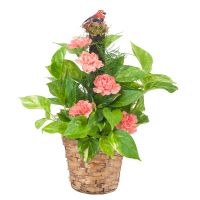 Pothos Plant with Fresh Flowers
