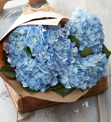 Market Style Bouquet of Hydrangea in Houston, TX