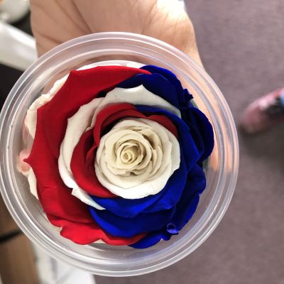 Single Preserved Rose - Red, white, and blue in Houston, TX