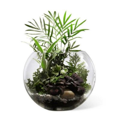 Lush Greens Terrarium Scent Violet Flowers And Gifts Houston Tx